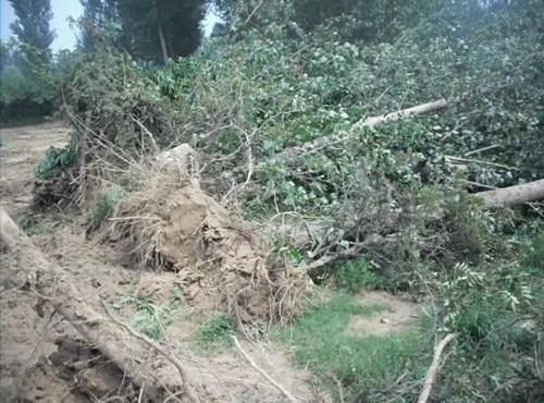 农民砍掉自己种的杨树后被判刑