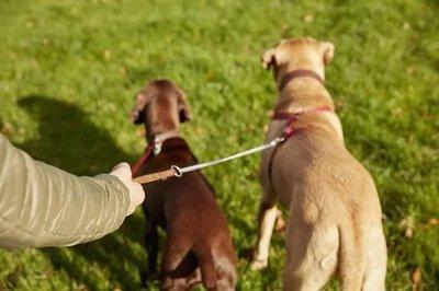 男子遛狗不拴绳被罚款2500元