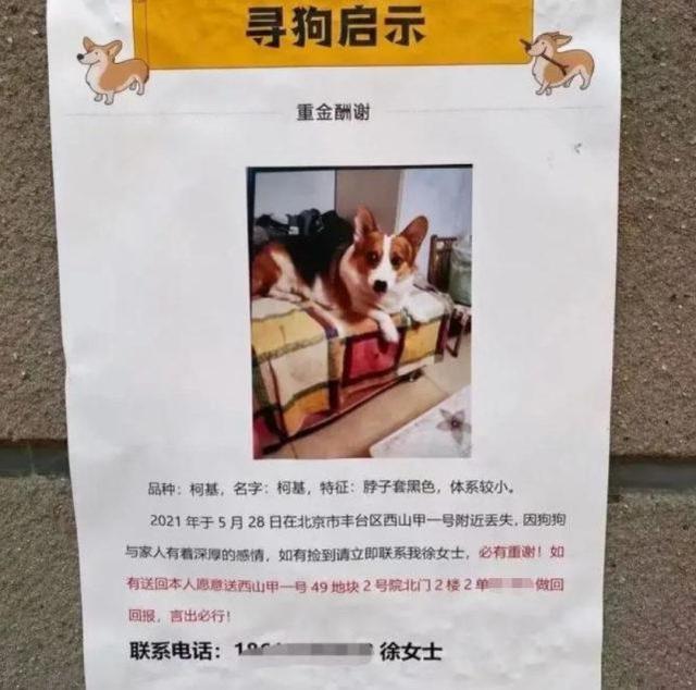 狗主人回应寻狗送房产:打印店搞错