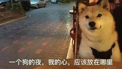 七夕单身狗发的搞笑朋友圈