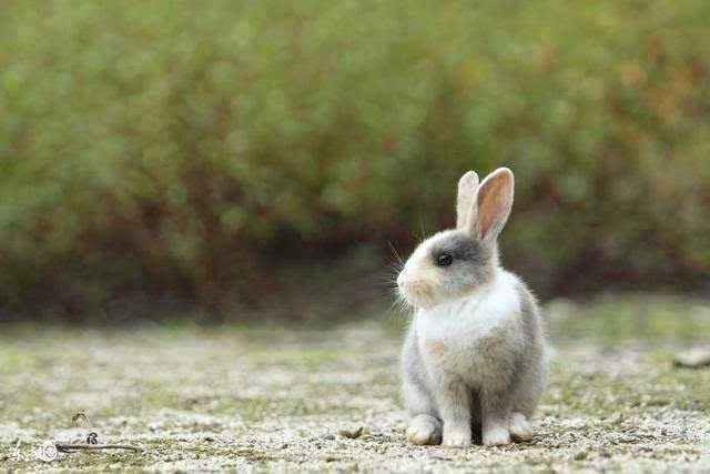 75年属兔46岁有牢狱之灾
