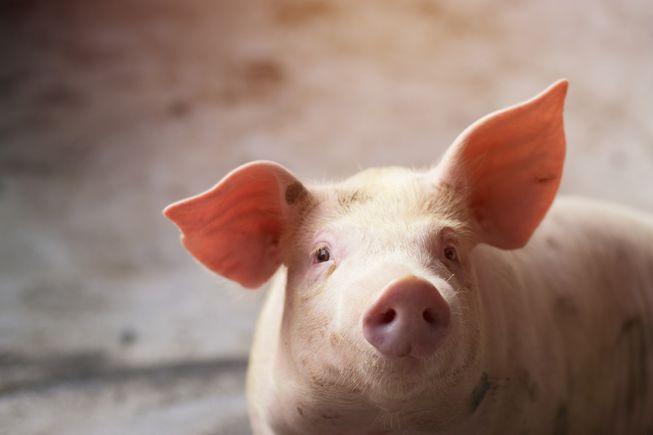 生肖猪2021年喜事