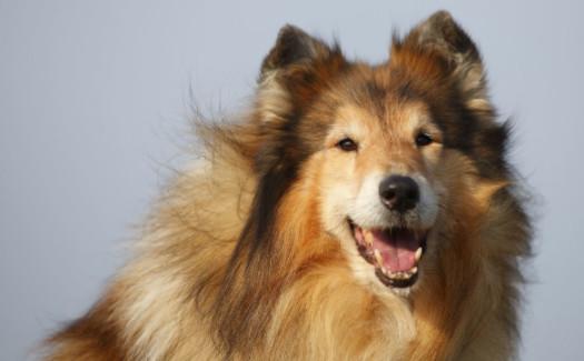 82年属狗女2021年有贵人吗