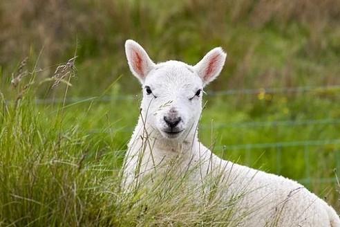 79年属羊43岁2021劫难