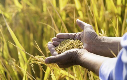 2021年强农惠农政策有哪些