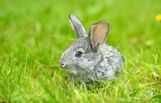 属兔人遇牛年必有一破