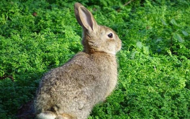 99年属兔几月命不好