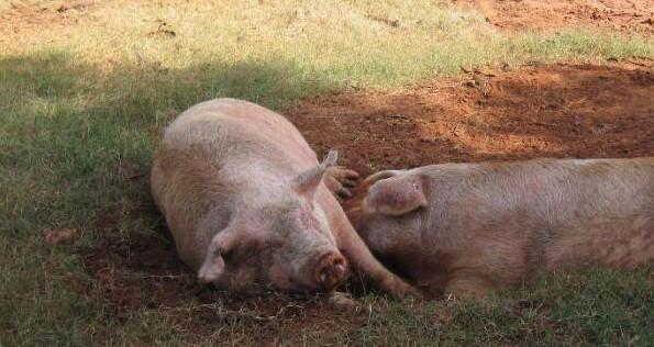 95猪女和96鼠男水火不容吗