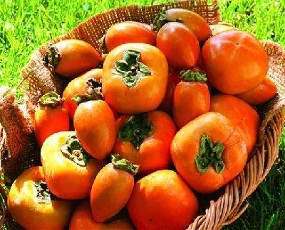 吃柿子减肥还是增肥