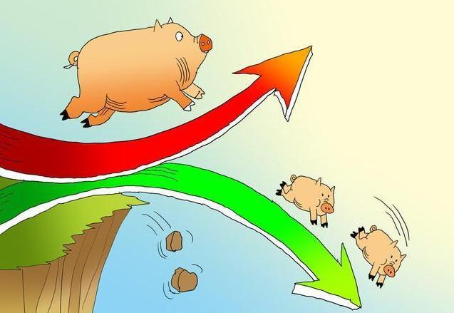 9月7日生猪价格今日猪价多少钱一斤 猪肉价格今日价走势全国