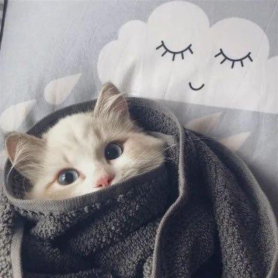 可爱猫咪微信头像