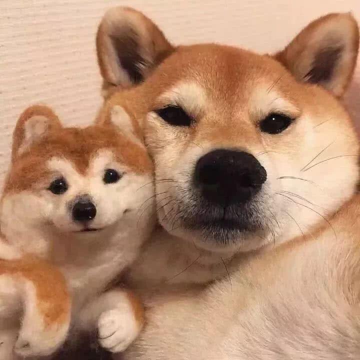 狗狗情侣头像一左一右