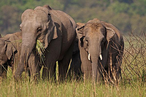 北移亚洲象群完全进入传统栖息地