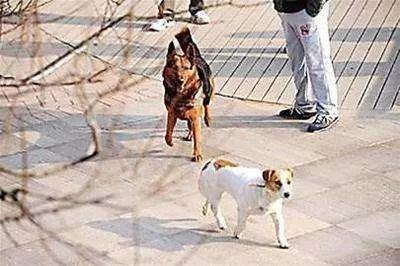 长沙养狗不牵绳怎么举报